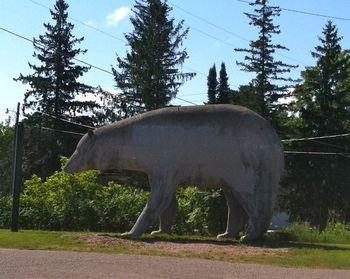 Bear, Vulcan near Norway, MI