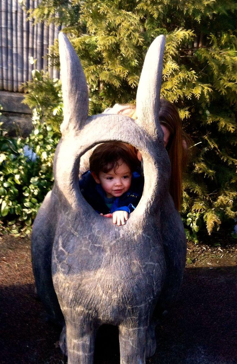Graham rabbit