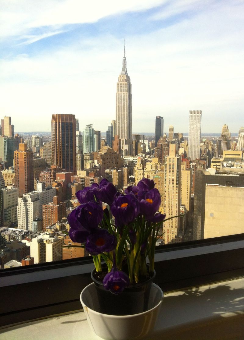 Crocus + empire state