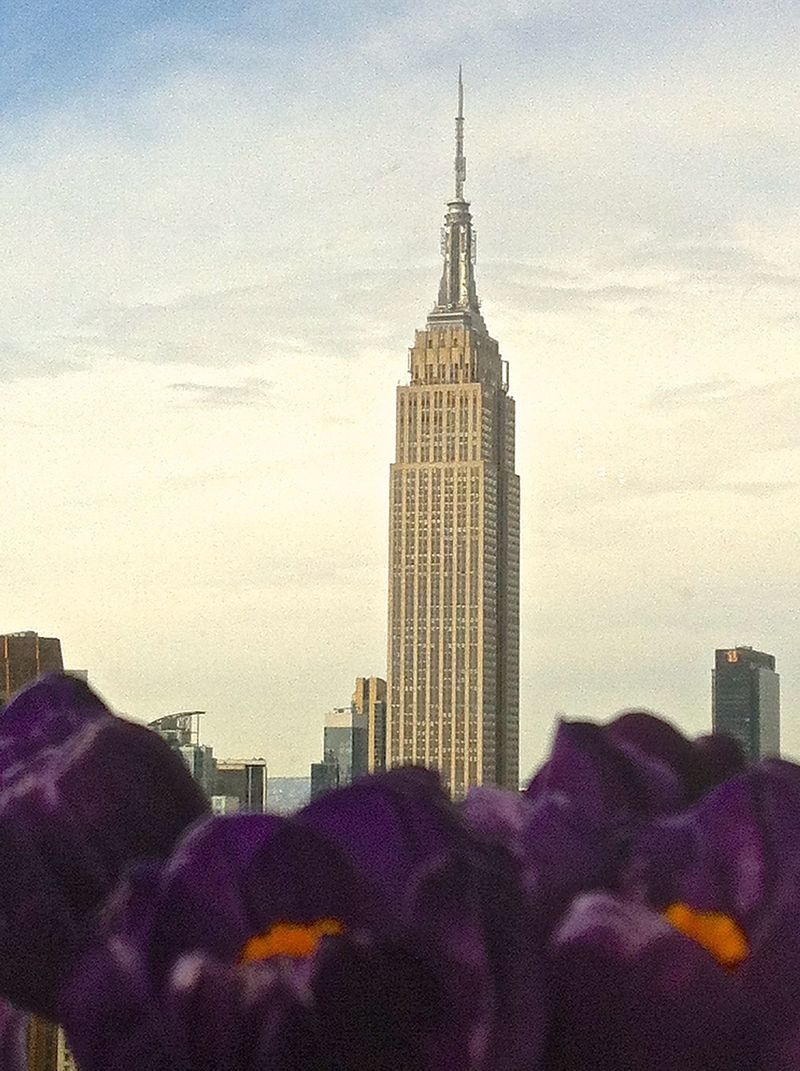 Crocus at base of empire state