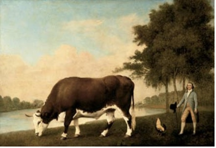 Lincolnshire Ox. George Stubbs. Walker Art Gallery